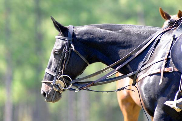 pretty-horse